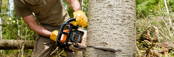 About Us | Bishop's Tree Service Inc - Virginia Beach, VA